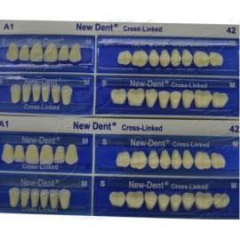 Api Acrylic Teeth Sets - Newdent