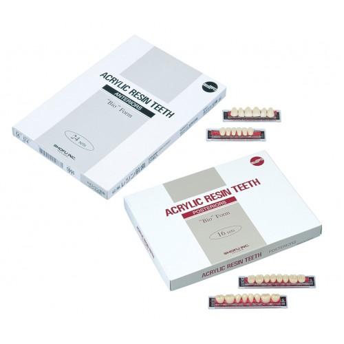 Yamachi Acrylic Resin Teeth - Pack of 4 fullset